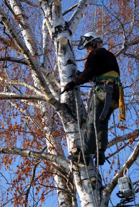 TreeCut-hudson-wi